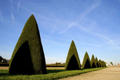 Conic trees in versailles Stock Photo