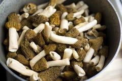 ?Conica de Morchella ?conique de morelle, un groupe de champignons comestibles d?licieux, champignons sauvages europ?ens d?licieu photo libre de droits