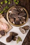 Conica fresco della morchella, funghi stagionali Fotografie Stock Libere da Diritti