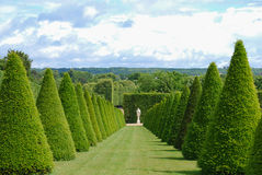 Conical hedges lines and lawn, Versailles Chateau, France. Conical hedges, Versailles Chateau, France Stock Images
