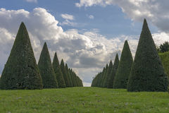 Conical hedges lines and lawn, Versailles Chateau, France Royalty Free Stock Photo