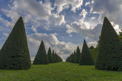 Conical hedges lines and lawn, Versailles Chateau, France Stock Photography