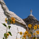 Conical roof of traditional trulli house in the Aia Piccola residential area of Alberobello, Puglia Italy. Flowers in foreground. Conical roof of traditional dry stock photo