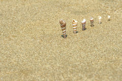 Conical sea snail Royalty Free Stock Photos