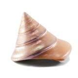 Conical shell. Isolated on white background Royalty Free Stock Images