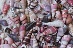 Conical sea shells background Royalty Free Stock Photos