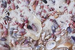 Conical sea shells in sand Stock Photo