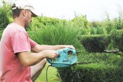 Conifères professionnels de Pruning de jardinier Photo stock