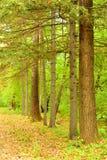 Conifére et arbres à feuilles caduques en parc Photographie stock