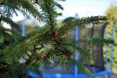 conifer стоковое фото rf