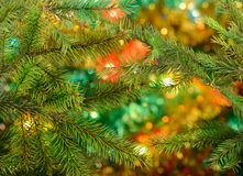 Conifer background with lights Stock Photo