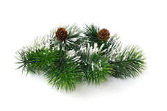 Conifer branch with cones Royalty Free Stock Photos