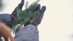 Conifer branches in the hands of a young woman with sunlight, close-up stock footage