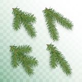 Conifer branches set. Green branches of a Christmas tree isolated on transparent background. Conifer branch symbol of Christmas. And New Year. Holiday decor royalty free illustration