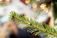 Conifer on Christmas Market Royalty Free Stock Images