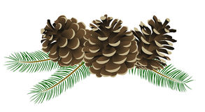 Conifer cone Royalty Free Stock Photos