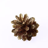 Conifer cone Royalty Free Stock Photo