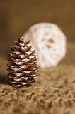 Conifer cone Royalty Free Stock Photography