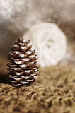 Conifer cone Stock Image