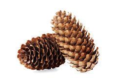 Conifer cone, fir cone or fir apple on white Stock Image