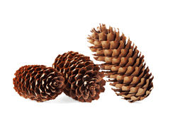 Conifer cone, fir cone or fir apple on white Royalty Free Stock Photography