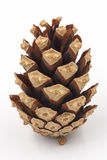 Conifer cone Stock Photo