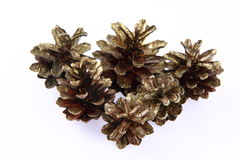 Conifer cones Stock Images
