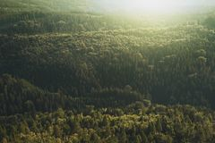 Conifer, Daylight, Evergreen, Forest, Stock Photography