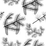 Conifer drzew gałąź bezszwowy wzór, czarny rysunek, przejrzysty tło Zdjęcia Royalty Free