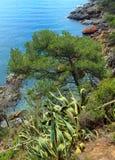 Conifer drzewo i obdzierająca agawa nad morze Obraz Stock