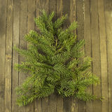 Conifer figure background Stock Image