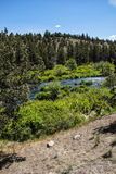 Conifer forest along the Deschutes River Stock Image