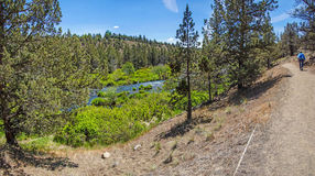 Conifer forest along the Deschutes River. In the high desert of central Oregon, near Redmond stock photography