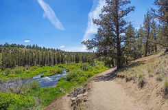 Conifer forest along the Deschutes River Stock Images