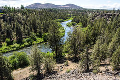 Conifer forest along the Deschutes River Royalty Free Stock Image