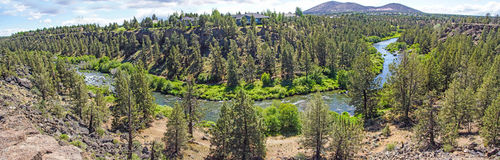 Conifer forest along the Deschutes River Royalty Free Stock Photography