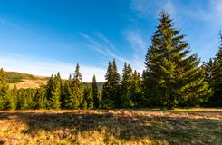 Conifer forest in classic Carpathian mountain Landscape. Classic Carpathian landscape. Autumn landscape in mountains of Romania. Conifer forest on hillsides of Stock Images