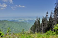 Conifer forest on mountain slope Stock Images