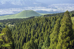 Conifer forest and hill. Bright green conifer forest in front of green hill and rural area Stock Photography