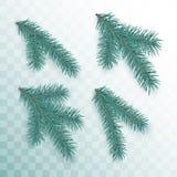 Conifer gałąź ustawiać Zieleni gałąź choinka odizolowywająca na przejrzystym tle Wakacyjny wystroju element wektor royalty ilustracja