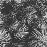 Conifer lasowi szczegóły plsnt greyscale i biały zdjęcie royalty free