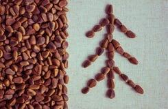Cedar nut harvest. Royalty Free Stock Photo