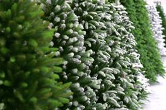 Conifer New Year`s Christmas background from green artificial Ch Royalty Free Stock Image