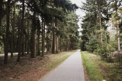 Conifer path Royalty Free Stock Photos