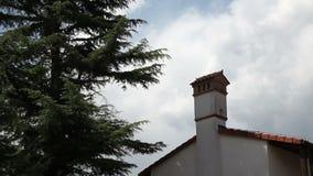 conifer pozycja blisko domu zbiory