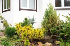 Conifer rockery in the garden Stock Images