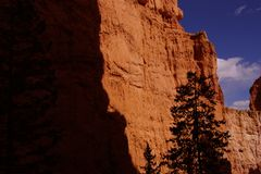 Conifer silhouette against red Navajo sandstone Stock Photo