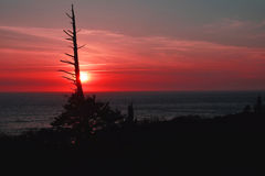 Conifer snag at sunset Stock Images