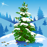 Conifer and star Stock Image
