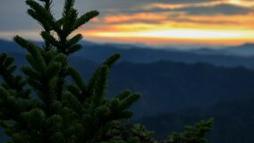 Conifer tree and sunset